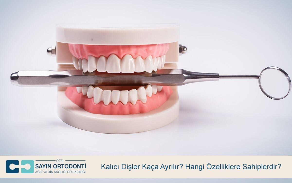 Kalıcı Dişler Kaça Ayrılır? Hangi Özelliklere Sahiplerdir?
